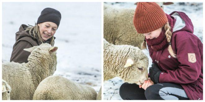 """Szwedzka wełna"" – pilotażowy projekt Fjällräven"