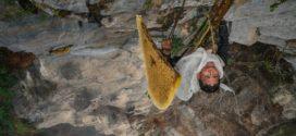 Łowcy miodu w Himalajach