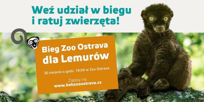 Charytatywny Bieg ZOO Ostrava dla Lemurów!