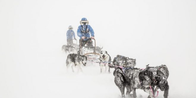 Zima – najlepszy czas na spotkanie z naturą