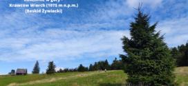 Rodzinnie w góry – na Krawców Wierch (1075 m n.p.m.) [Beskid Żywiecki]